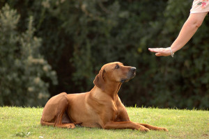 Obedience training can help dispel aggresive behavior.