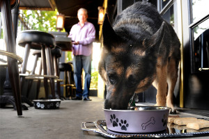 Dogs in restaurants must never eat off of equipment used by humans.