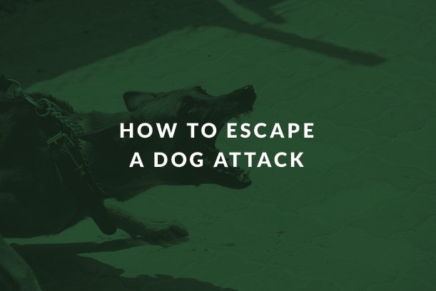 How to Escape a Dog Attack